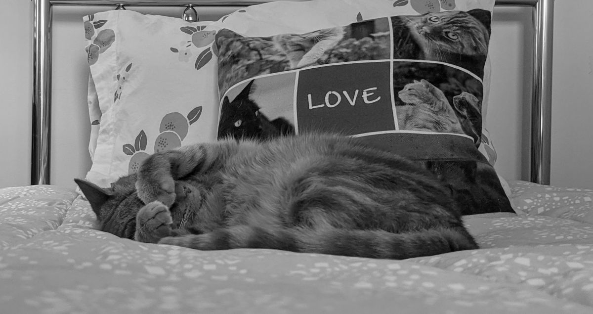 Kerri Lee Smith - Mack's favorite possession - the fluffy comforter