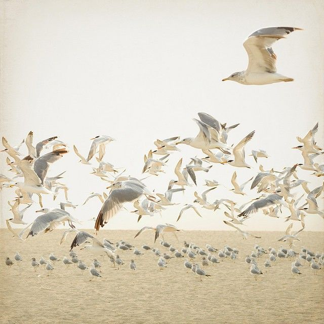 K.Hurley - Birds In Flight, https://flic.kr/p/7wNEDi