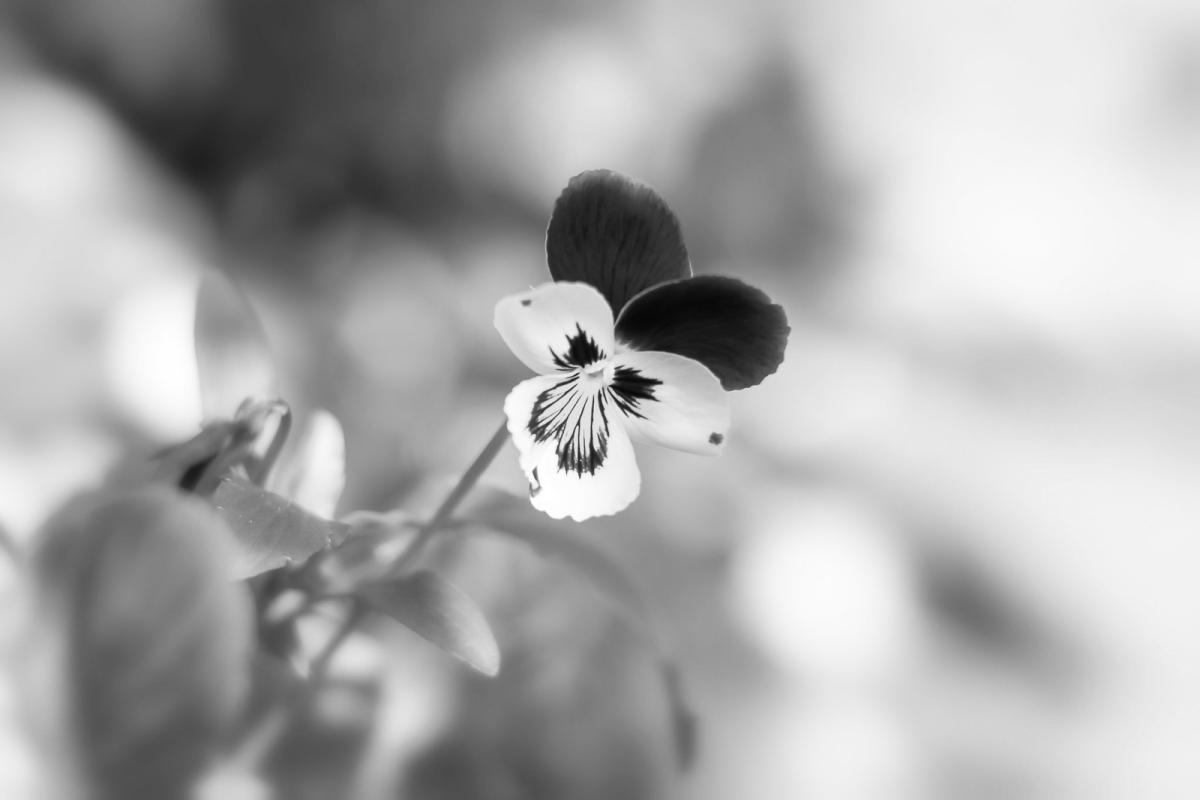 Sunny - flowers