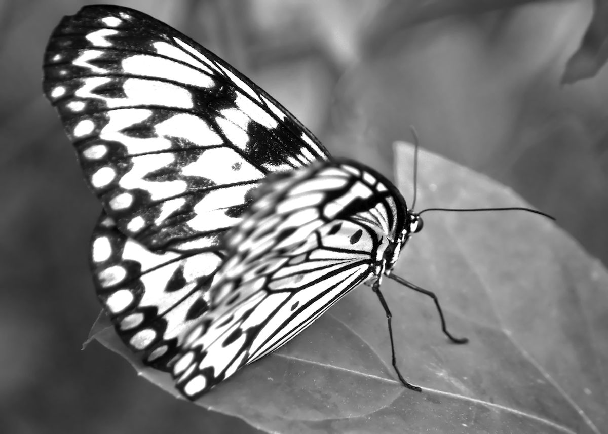 Butterfly - Butterfly