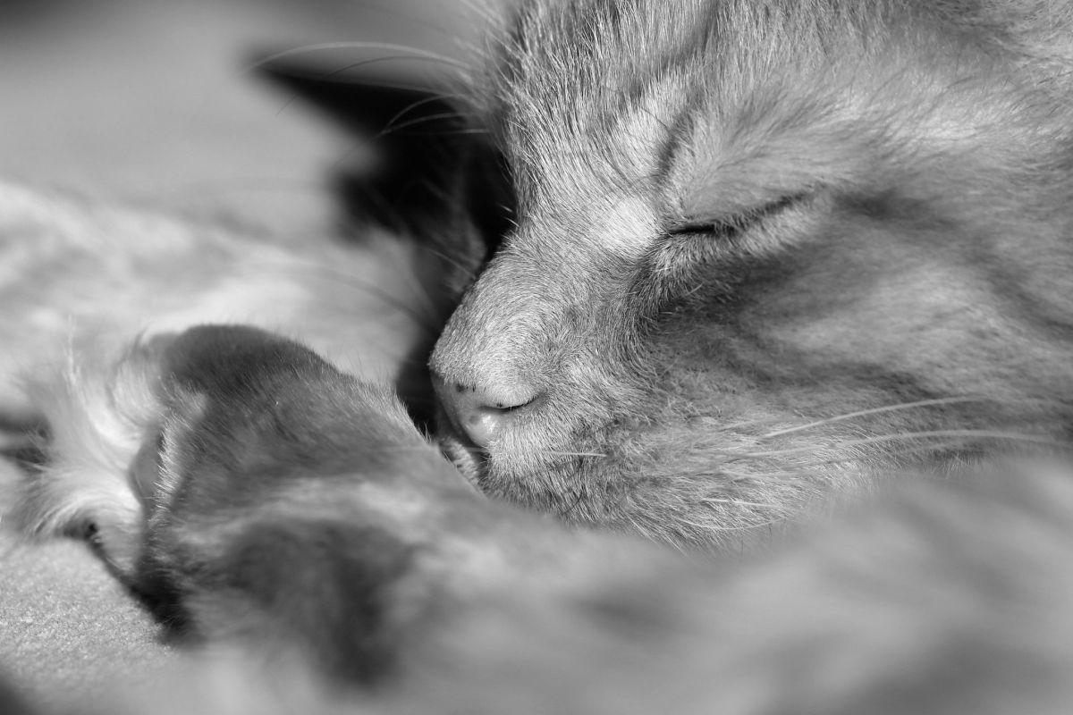 fizzybeth - cat nap