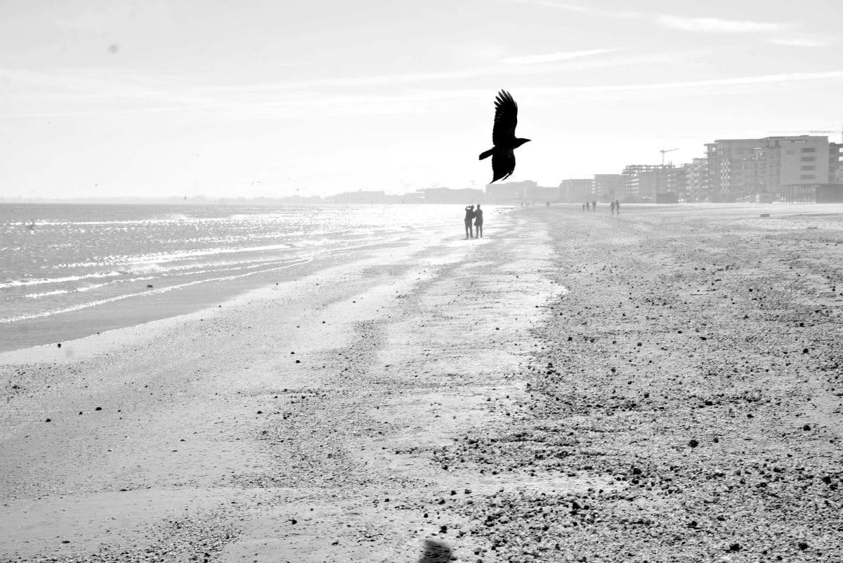 Pasăre la mare, pe plajă