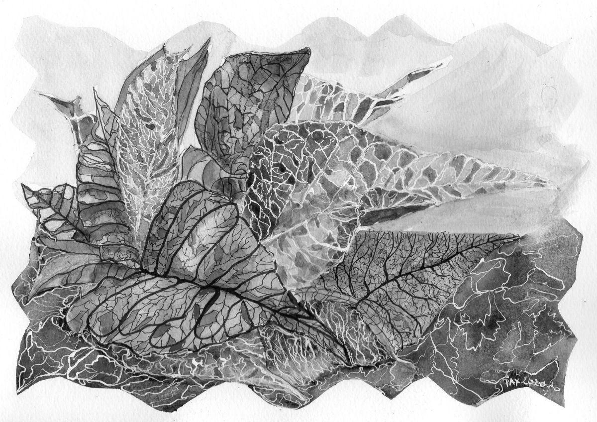 Paul Xhrouet - Vegetable