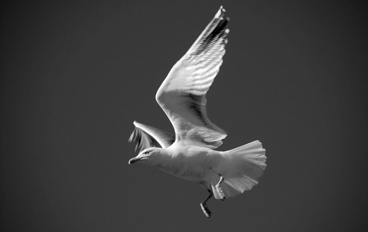 Tony Hammond - On a Wing and a Prayer!