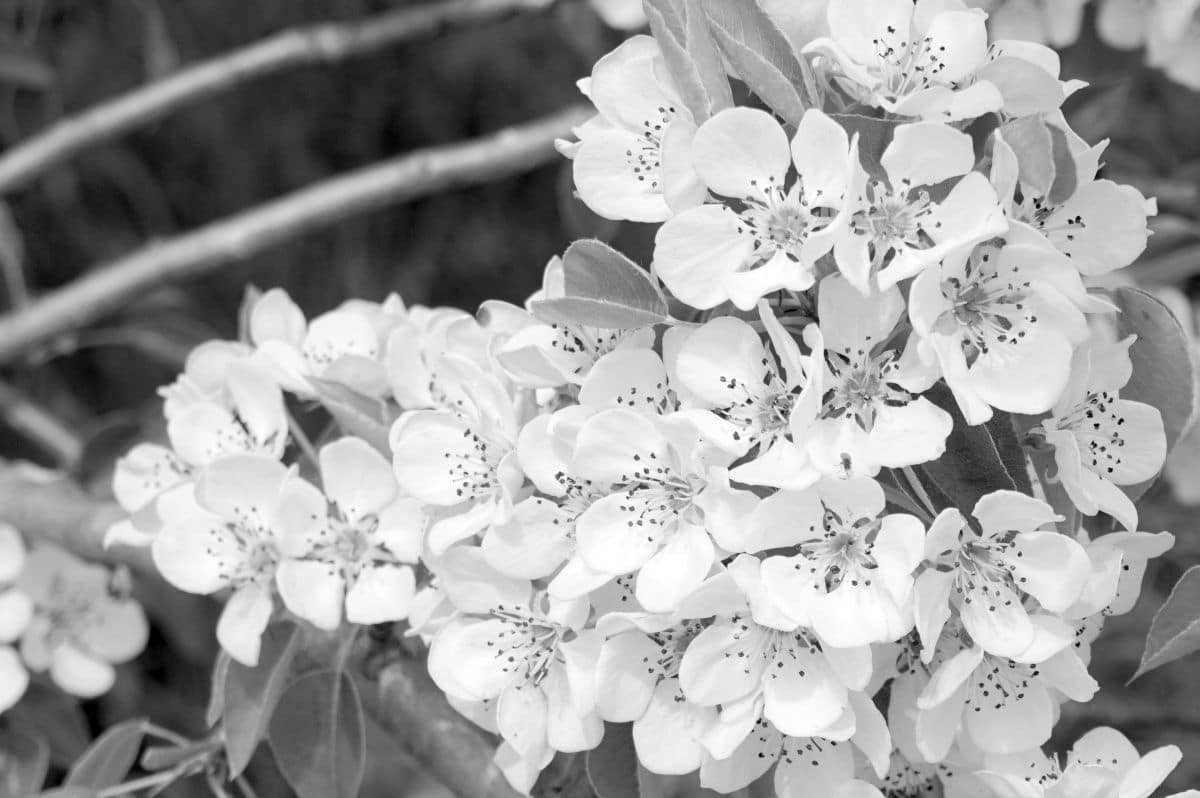 Flori de 1 mai 2021