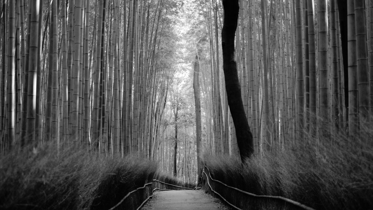 ababhastopographer - bamboo forest path