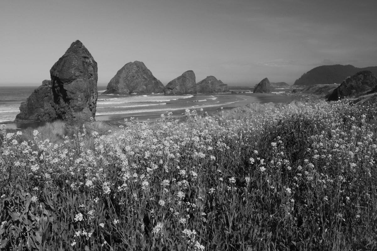 Don McCullough - Sea-stacks and Flowers