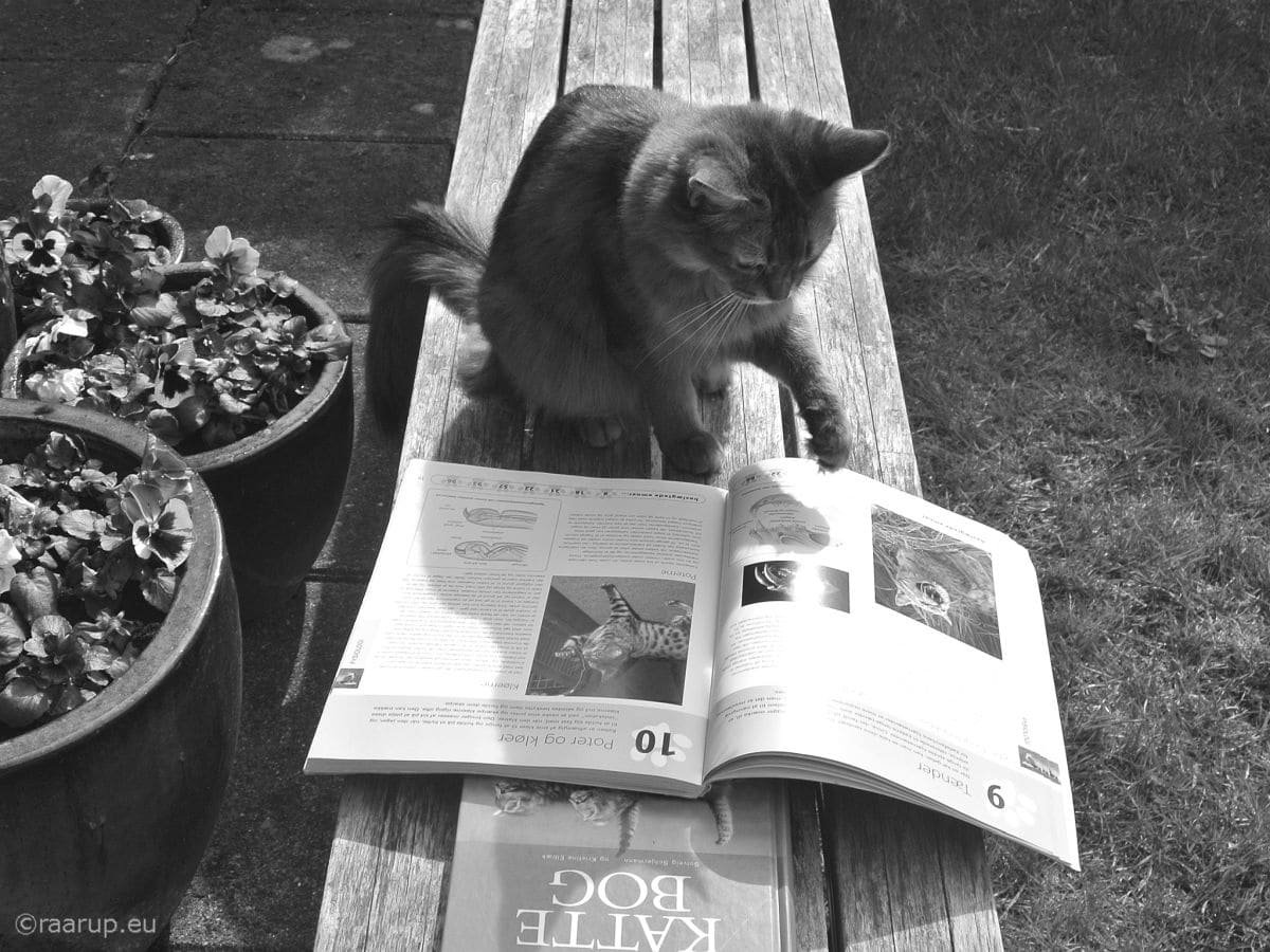 Finn Frode - Caithlin and books - for Happy Caturday